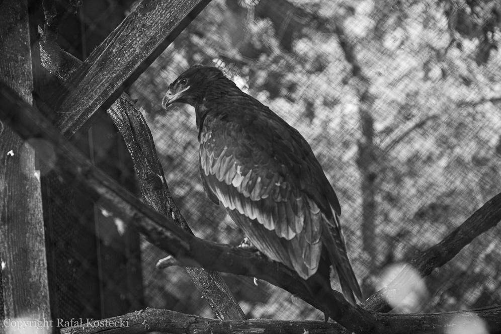 Ptaki 1