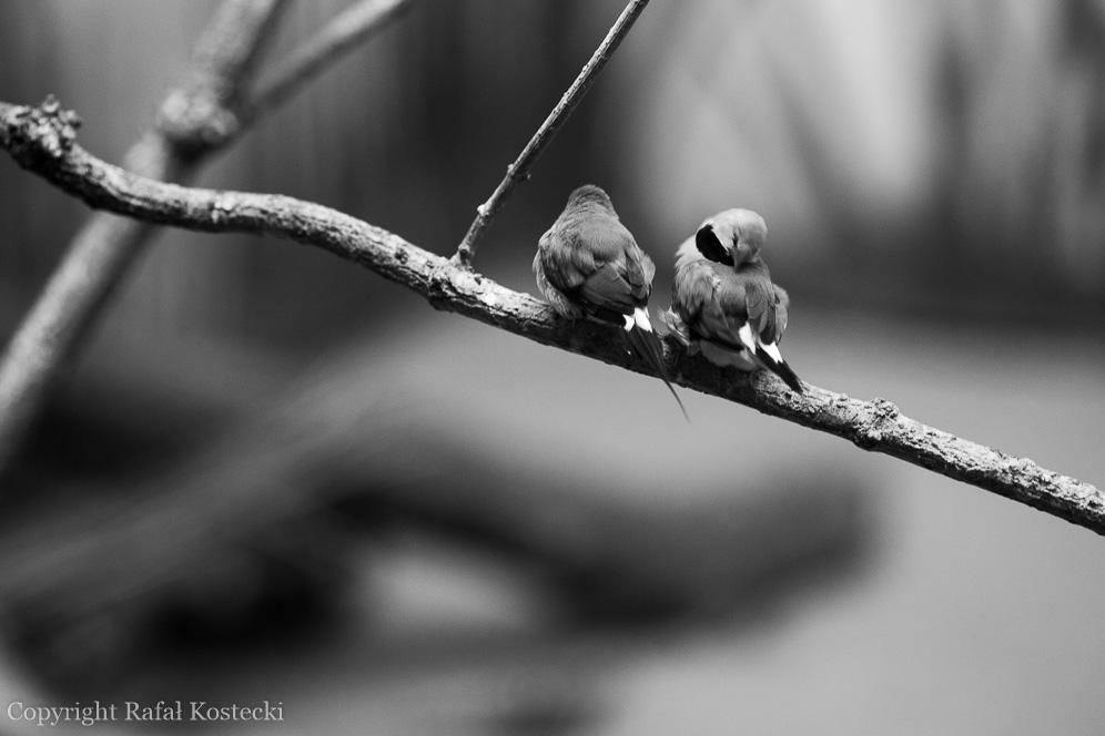 Ptaki 4